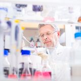 Lebenwissenschaftler, der im Labor erforscht Lizenzfreies Stockfoto