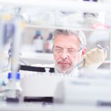 Lebenwissenschaftler, der im Labor erforscht Lizenzfreie Stockbilder