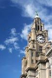 Leber, die Liverpool errichtet Stockfotos