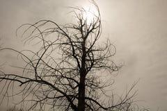 Lebloser Baum an einem kalten, bewölkten Tag stockbild