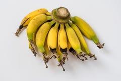 Lebmuernang banan Obrazy Royalty Free