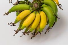 Lebmuernang banan Zdjęcie Stock