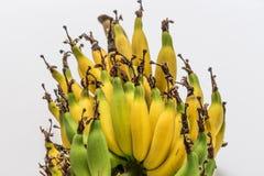 Lebmuernang banana. Isolated lebmuernang banana from my backyard Royalty Free Stock Photography