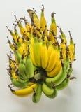 Lebmuernang banana. Isolated lebmuernang banana from my backyard Stock Image