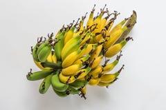 Lebmuernang banana. Isolated lebmuernang banana from my backyard Royalty Free Stock Photo