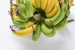 Lebmuernang banana. Isolated lebmuernang banana from my backyard Stock Images