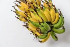 Lebmuernang banana. Isolated lebmuernang banana from my backyard Stock Photo