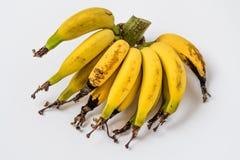 Lebmuernang banana. Isolated lebmuernang banana from my backyard Royalty Free Stock Images