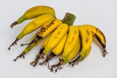Lebmuernang banana Stock Photos