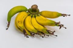 Lebmuernang banana. Isolated lebmuernang banana from my backyard Stock Photography