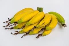 Lebmuernang banana. Isolated lebmuernang banana from my backyard Royalty Free Stock Photos
