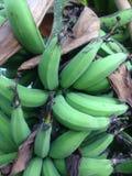 Lebmuernang bananowego drzewa zieleni liść fotografia stock