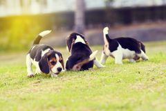 Lebreiros pequenos bonitos Imagem de Stock Royalty Free