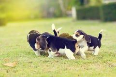 Lebreiros pequenos bonitos Imagem de Stock