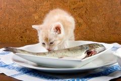 Leccatura dei pesci Immagini Stock