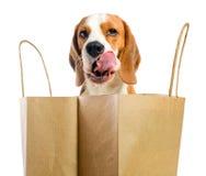 Leccatura del cane degli orli. fotografia stock libera da diritti