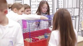 Lección en biología en escuela primaria almacen de metraje de vídeo