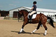 Lección de montar a caballo de lomo de caballo Foto de archivo libre de regalías