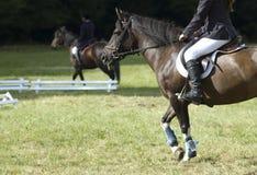 Lecciones del montar a caballo Imagen de archivo