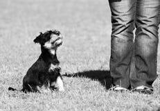 Lecciones del perro de perrito Imagen de archivo