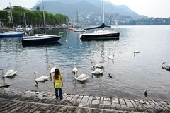 Little girl watching a great number of white swans swimming in the water. royalty free stock images