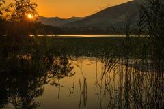 Leccomoeras van het Annonemeer tijdens zonsondergang stock foto's