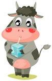 Leche de consumo de la vaca Foto de archivo libre de regalías