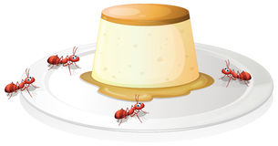 A leche flan in a plate with four ants Stock Photos