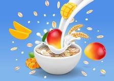 Leche inmediata de la publicidad del mango de la harina de avena que fluye en un cuenco con el grano Fotografía de archivo libre de regalías