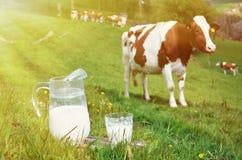 Leche y vacas Foto de archivo libre de regalías