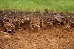 Lecho de la hierba Foto de archivo libre de regalías