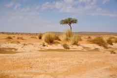 Lecho de un río seco en Libia Fotos de archivo libres de regalías