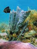 Lecho marino fotografía de archivo