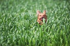 Lechoso el perro fotos de archivo
