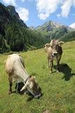 Lechtal Alps. Hahntennjoch and Muttekopf at the Lechtal Alps near Imst. North Tirol. Austria Royalty Free Stock Photos