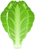 Lechuga libre illustration