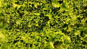 Lechuga de hoja verde foto de archivo libre de regalías