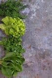 Lechuga de romaine verde Fotografía de archivo libre de regalías