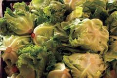 Lechuga fresca Salade Fotografía de archivo libre de regalías
