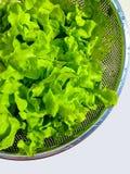 Lechuga para la verdura sana, verde Imágenes de archivo libres de regalías