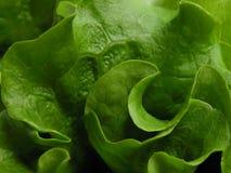 Lechuga verde imagen de archivo libre de regalías