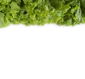 Lechuga verde en la frontera de la imagen con el espacio de la copia para el texto Fotografía de archivo