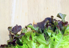 Lechuga violeta foto de archivo libre de regalías