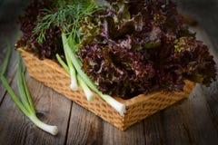 Lechuga y cebolleta púrpuras frescas en cesta Fotos de archivo