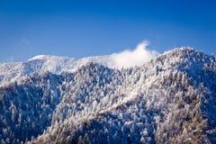 Leconte de support dans la neige dans les smokies Photo libre de droits