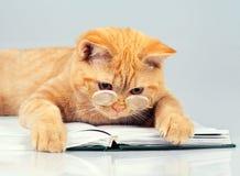 Lector del gato Imagenes de archivo