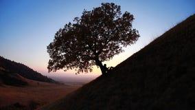 Lectura de la silueta contra árbol en la puesta del sol Foto de archivo