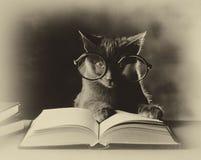Lectura de los gatos, blanco y negro Imagenes de archivo