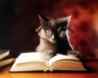 Lectura del gato Foto de archivo libre de regalías