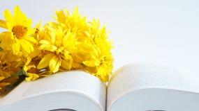 Lectura del libro Fotografía de archivo libre de regalías